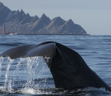 Whale and Andenes
